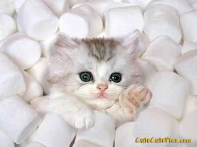 cute-kitten-marshmellows