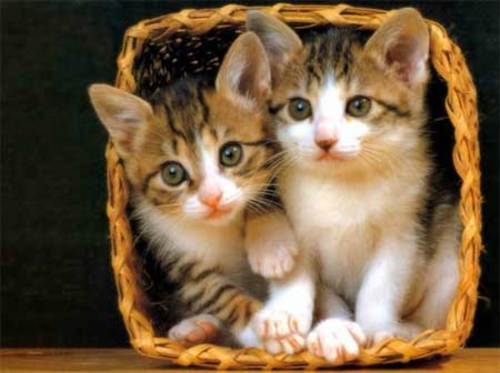 cute-kittens--large-msg-120378489599